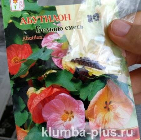 Абутилон — эффектное растение с кленовыми листьями