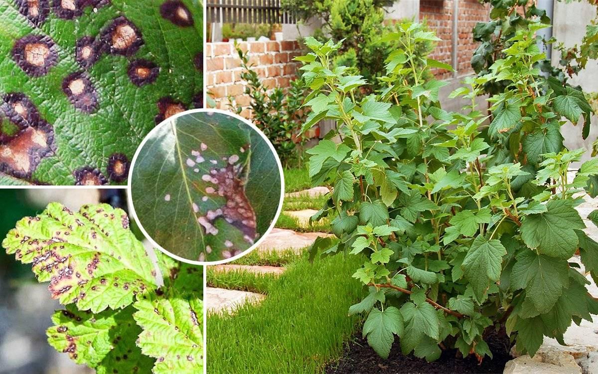 Болезни помидоров в открытом грунте и борьба с ними