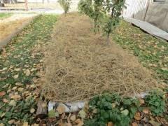 Зачем и чем делают мульчирование почвы