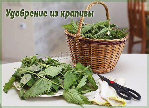Как использовать крапиву в качестве удобрения и какие растения можно подкармливать