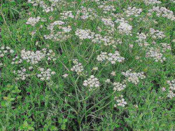 Как вырастить гибискус из семян в домашних условиях?
