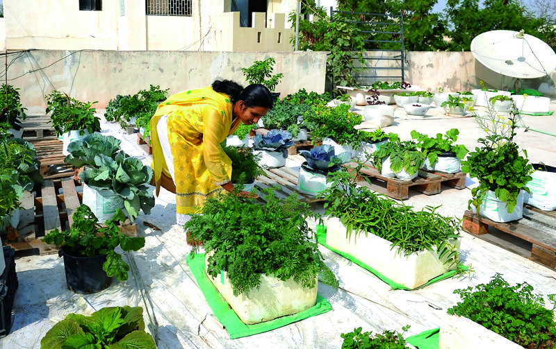 Огород на крыше — возможно ли создать полноценные грядки на крыше, видео