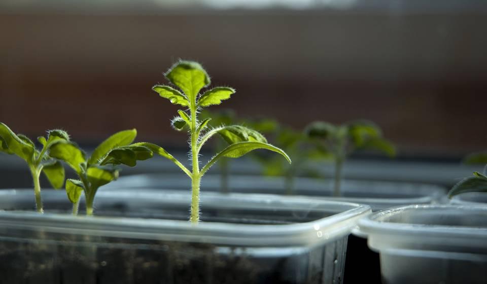 Стратификация семян в домашних условиях: для чего нужна и как делать?