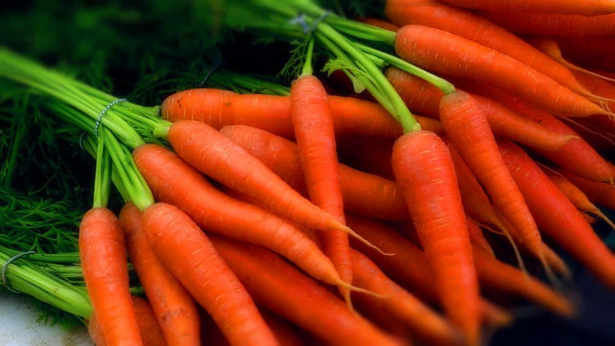5 секретов идеально сладкой и крупной моркови