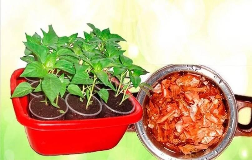 Секреты богатого урожая: применение луковой шелухи для огорода и сада