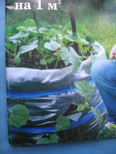 Выращивание огурцов в пластиковых бутылках: любопытный опыт и достойный результат!