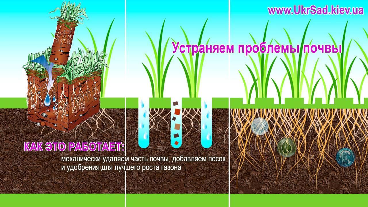 Правила аэрации и скарификации газона, инструменты