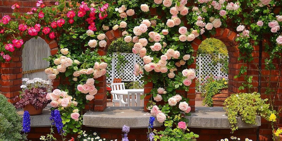 Как использовать розы в ландшафтном дизайне