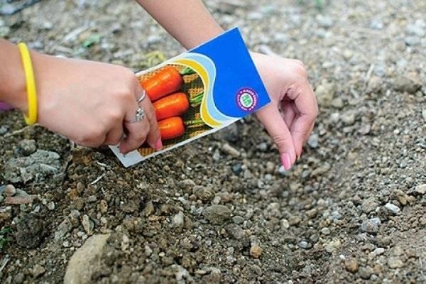 Успеть вовремя! каков последний срок посадки моркови?