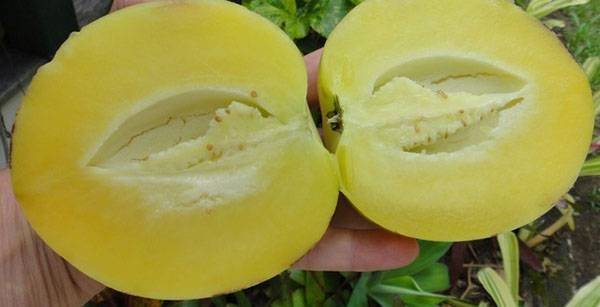Дынное дерево — какие плоды дает и где растет