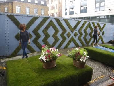 Хризантема из семян: правила выращивания