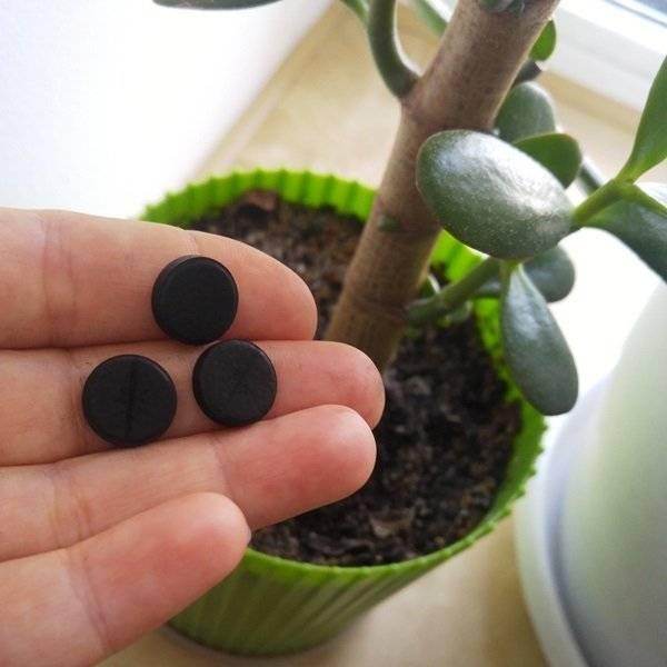 Применение Корневина для комнатных растений, преимущества