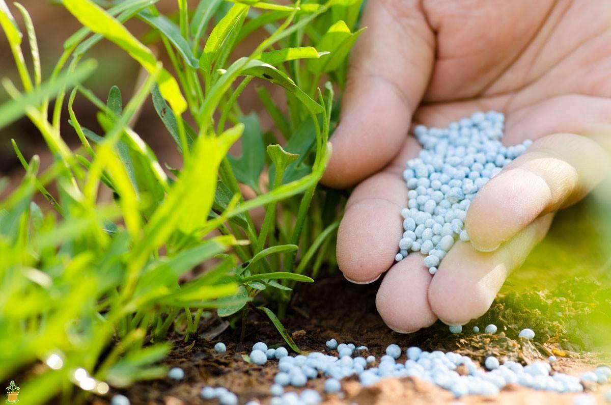 Калийные удобрения: свойства, виды, порядок применения