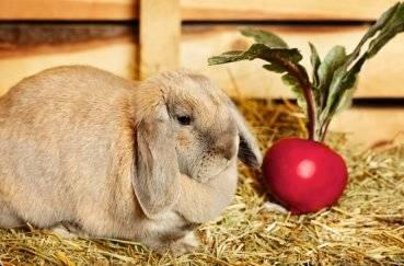 Сныть для кроликов — вкусная и полезная подкормка