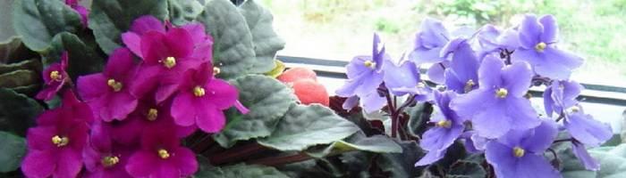 Медный купорос для лечения и защиты растений