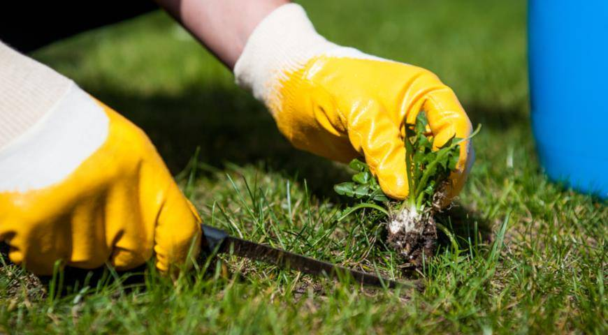 Как избавиться от сорняков — фото,видео.