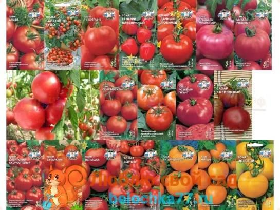 Характеристика и описание сорта томата уральский ранний, высота растения