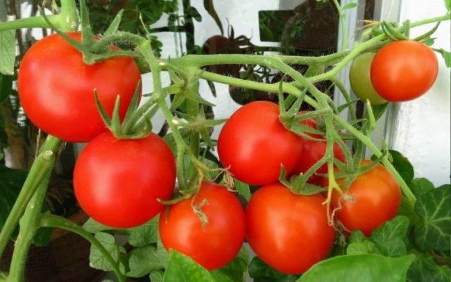 Борная кислота в садоводстве — свойства и способы применения