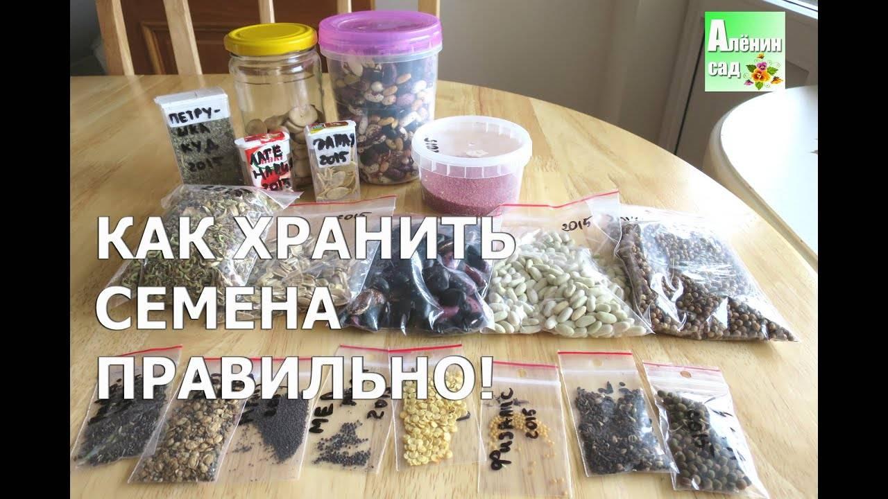 Подготовка к посеву, или как повысить всхожесть семян
