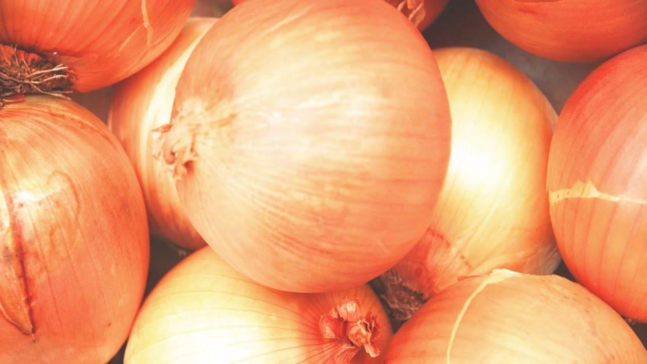 Луковая шелуха как удобрение для садовых и комнатных растений