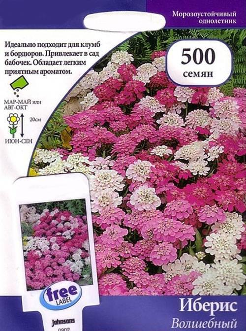 Цветок иберис многолетний — выращивание и уход