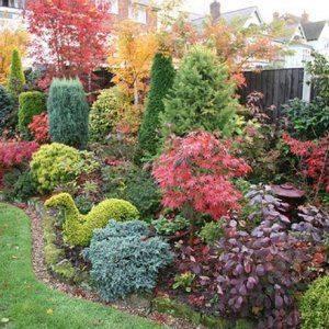 Растения для зимнего сада – какие подойдут именно вам