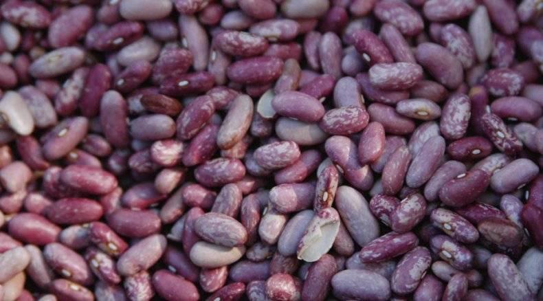 Фасоль: выращивание и особенности ухода