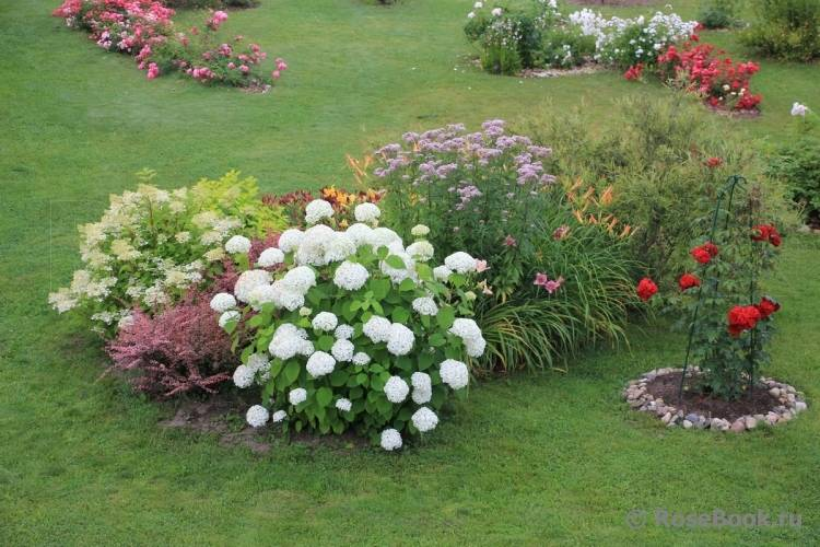 Важно знать, как вывести портулак огородный