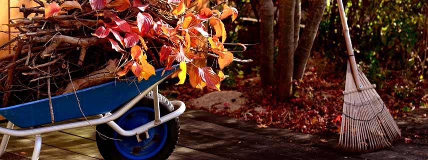 Работы в саду и огороде осенью