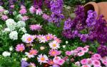 Тонкости выращивания и секреты цветения опунции