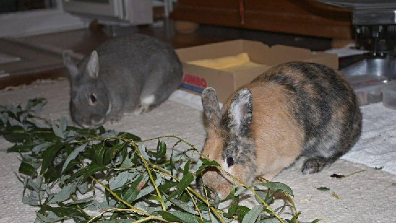 Чем кормить кроликов — подробный разбор