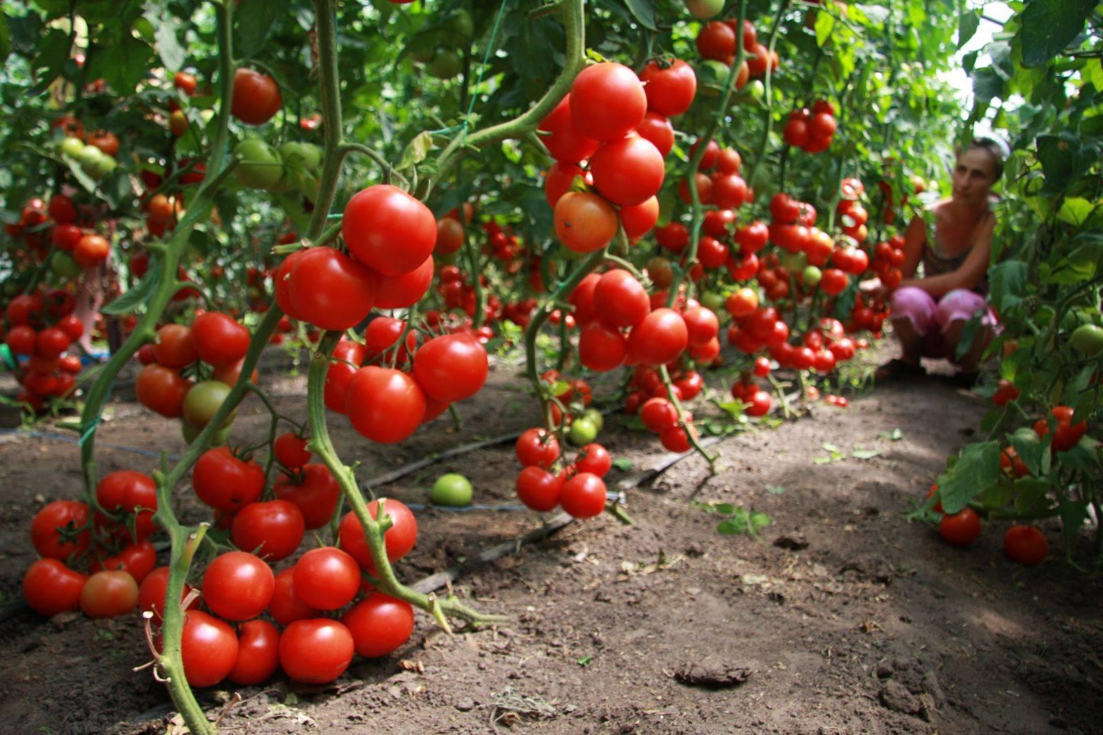 Органоминеральные удобрения – урожая не избежать!