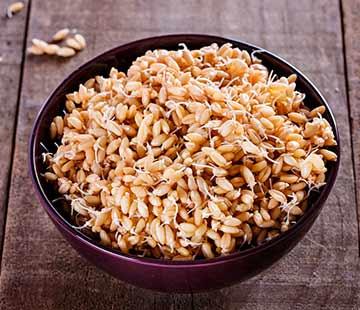 Пророщенная пшеница — польза и возможный вред