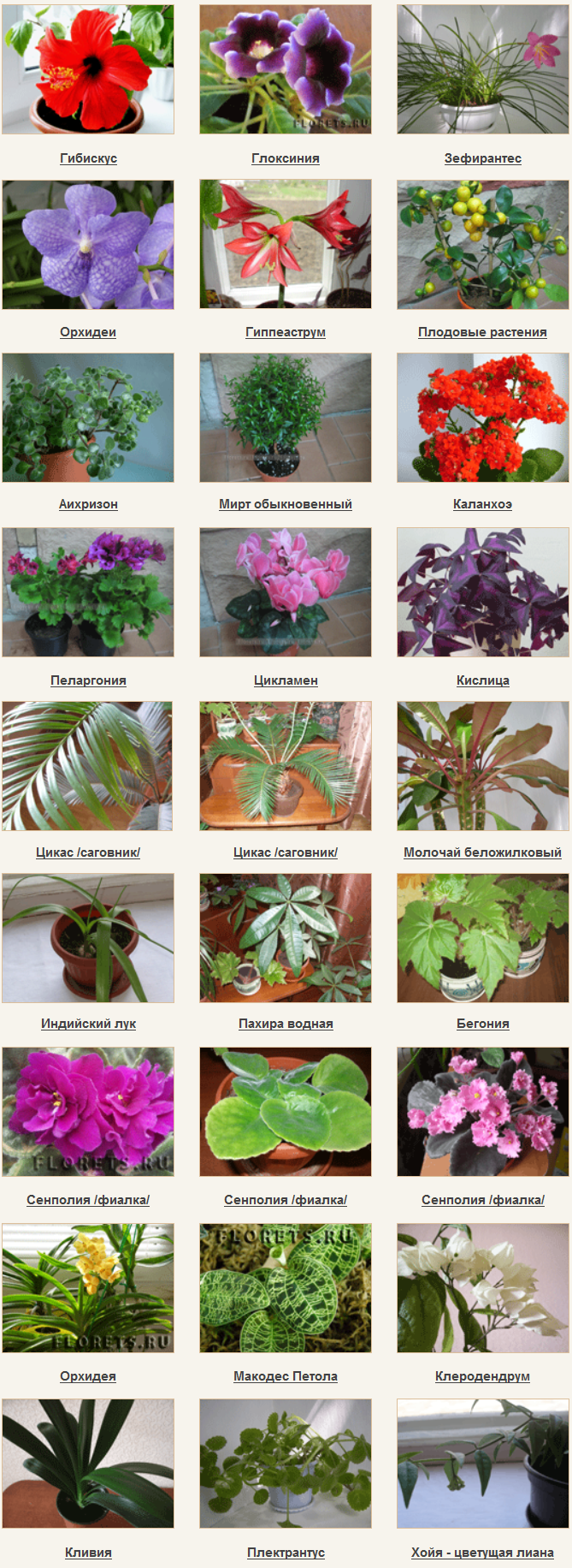 справочник комнатных растений с фото и названиями