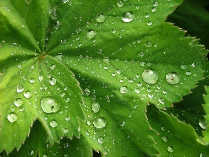 Испарение воды растениями.