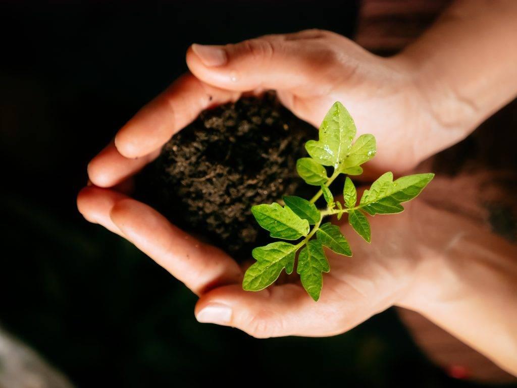 Аммофос — источник важных элементов для почвы и растений