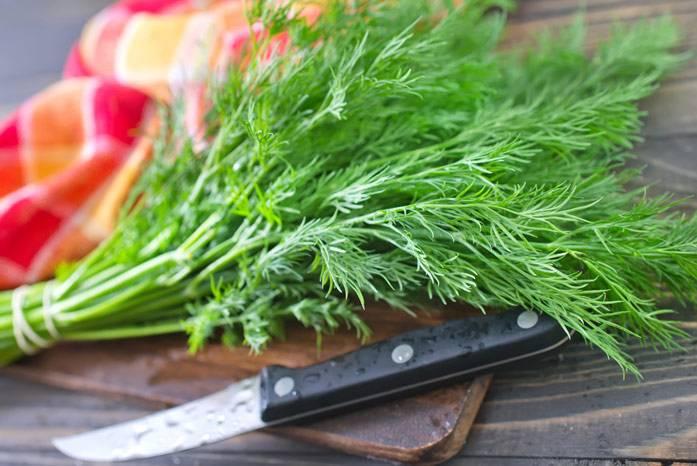Чем полезен ароматный укроп: польза и вред для нашего здоровья