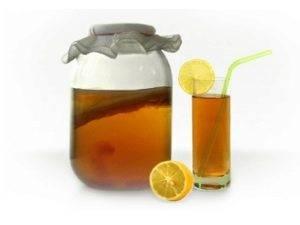 Как вырастить чайный гриб дома?