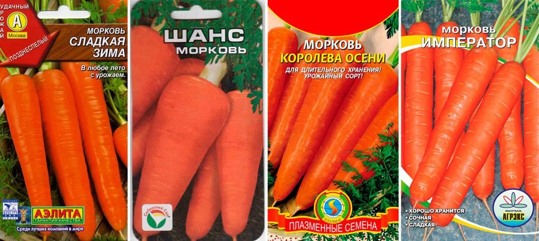 Перечень эффективных способов, как сохранить морковь на зиму в домашних условиях, если нет погреба