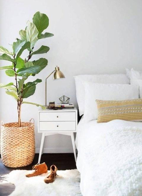 Цветы в спальне: какие ставить можно, а какие нельзя