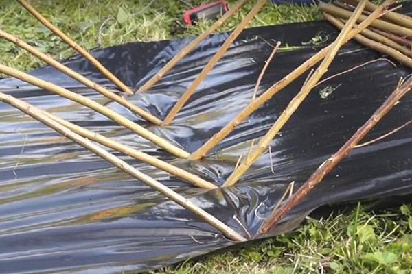 Высаживание черенков ивы на дачном участке