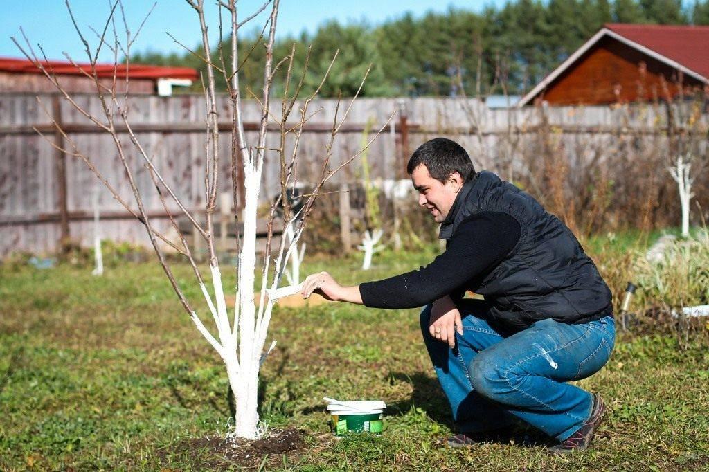 Какие работы следует выполнять в саду весной