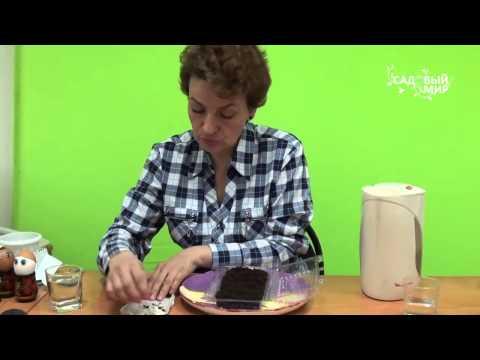 Выращиванием акацию из семян: практичные советы