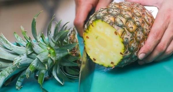 Все, что вы хотели знать о выращивании ананасов