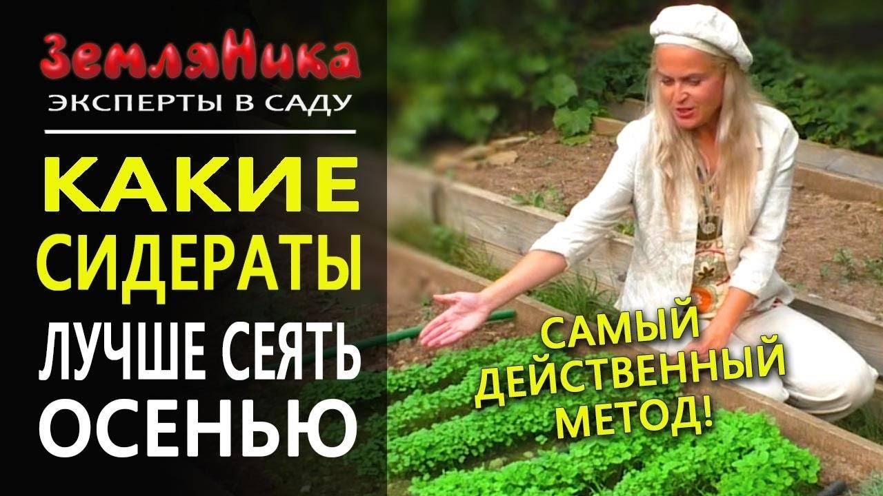 Какой сидерат посадить с картофелем. сидераты в междурядьях картофеля и сдвоенные рядки. средства для повышения плодородности почвы