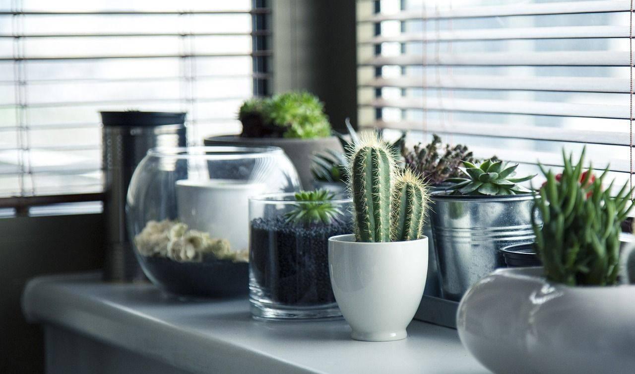 Виды домашних комнатных кактусов: уход, названия и фото