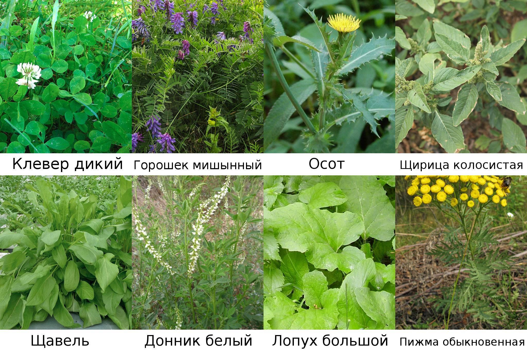 Растения, которые можно принести в сад с прогулки