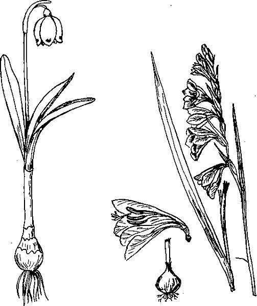 Особенности прибрежных растений