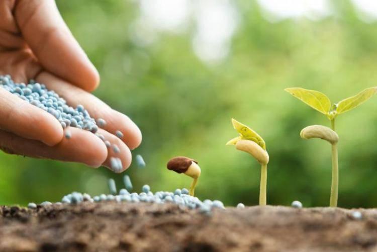 4 вида минеральных удобрений, которые всегда нужно иметь под рукой