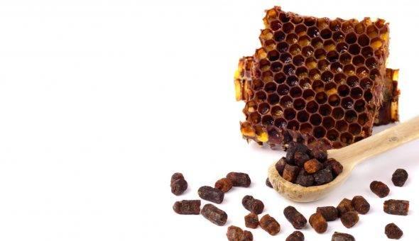 Перга пчелиная: лечебные свойства, как принимать и хранить